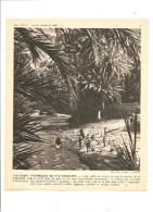 L´eau En Afrique Du Nord Une Oasis: Palmeraie Du Sud Marocain Photo De 1950 - Photos