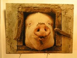 Animaux - Cochon - Cochons
