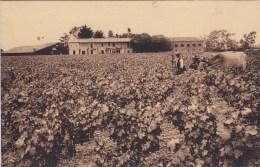 PAUILLAC Château MOUTON Rothschild Groupe De Bâtiments D'exploitation ( Vigne Attelage Bœufs …) Circulée 1937 - Pauillac