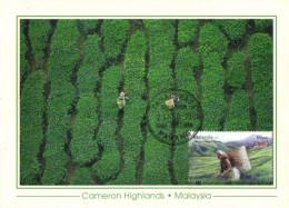 18D: Malaysia No 2 Cameron Highland Tea Garden (beverage Drink) Maximum Card Maxicard MC - Unclassified