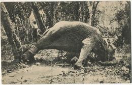 Elephant   Torture Animale à Ceylan A Struggling Elephant Edit Platé No 66 - Elephants