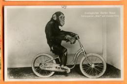 PCJ-15  Jardin Zoologique De Bâle Basel Schimpanse Max Auf Condor-Velo. Circulé En 1931 - Apen