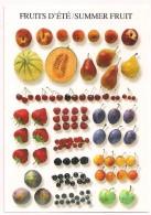 FRUITS D'ÉTÉ - SUMMER FRUIT - Pomme Poire Abricot Melon Cerise Fraise Framboise ...- éd. Nouvelles Images 1997 - Autres