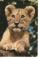 "Kenia, Leoncino (Lions) Thematic Stamps ""Buffalo"" - Leoni"