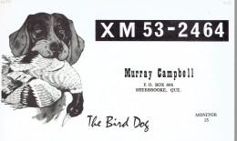 Bird Dog Chien Canard On QSL Card From Murray Campbell, Sherbrooke, Québec, Canada XM53-2464 (1968) - CB