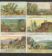 LIEBIG Sammelbilder  (19) , 6 Stück - L´Evolution Des Cactees - - Liebig