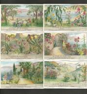 LIEBIG Sammelbilder  (16) , 6 Stück - La Flore De La Riviera - - Liebig