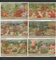 LIEBIG Sammelbilder  (11) , 6 Stück - Paysages Sous-Marins - - Liebig