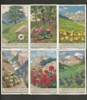 LIEBIG Sammelbilder  (07) , 6 Stück - Fleurs Des Alpes - - Liebig