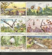 LIEBIG Sammelbilder  (02) , 6 Stück - L´ Art Constructif De L´ Araignee - - Liebig