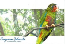 ILES CAIMANS. (Caraïbes)   Perroquet Amazone De Cuba (Grand Cayman Parrot), Carte Postale Neuve Des Iles Caimans - Birds