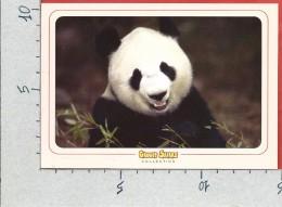 CARTOLINA VG ITALIA - GADGET SAFARI - Panda Gigante - 10 X 15 - ANN. 2004 - Animali