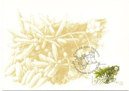 Maximum Card - Flores Dos Açores - Spergularia Azorica - Cartoline Maximum