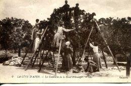 N°49603 -cpa La Cueillette De La Fleur D'oranger - Agriculture