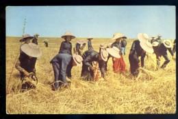 Cpa De Thailande --  Harvesting In Thailand    LIOB81 - Thailand