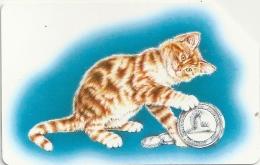 Italy - Telecom Italia - C.F.N Cat - Urmet - 1996, 40.000ex, Used - Italia