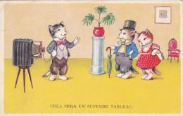CPSM Animaux Humanisés Chat Cat Catze Photographe Appareil Photo Fantaisie Illustrateur - Gekleidete Tiere