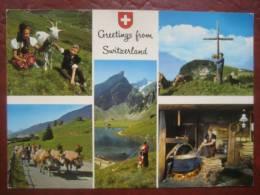 "Schweiz - Mehrbildkarte ""Greetings From Switzerland"" Almabtrieb, Käsen - Suisse"