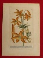 GRAVURE ANCIENNE FLEUR LIS MARTAGON  22.5 X 16 - Prints & Engravings