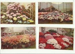 Gent Gand Exposition Universelle 1913 Floralies ( 8 Kaarten ) - Gent