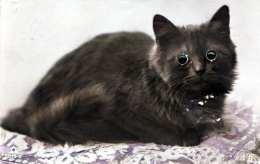 KATZE - Katze Mit Glasaugen, 191? - Phantasie