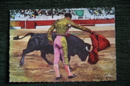 Travail De La Muleta Par Le Torero JUMILLANO - Corrida