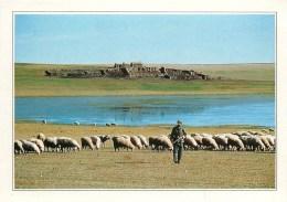 CPSM Mongolie-La Steppe     L2102 - Mongolie