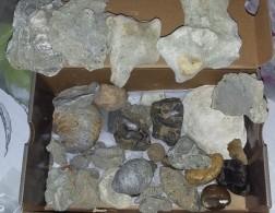 Lot De Fossiles Et Mineraux - Archeologie