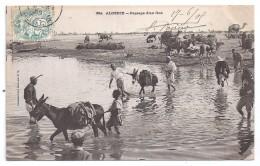 CPA Algérie Passage D'un Gué Belle Animation ânes Dromadaires édit Idéale PS N°364 écrite Timbrée 1905 - Other