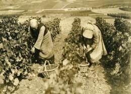 France Vendanges Les Femmes Remplacent Les Hommes Ancienne Photo 1939 - Professions