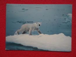 Norway Svalbard Polar Beer 1972 Timbre Alta Nice Stamp - Norwegen