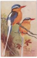 Roland Green Artist Signed Image Martin-Pecheur Australia Birds On Branch C1910s/30s Vintage Postcard - Uccelli