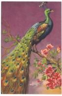 Carlo Artist Image Bird, Peacock, C1920s/30s Vintage Postcard - Birds