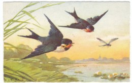 Klein Artist Image Birds In Air With Dragonfly Insect, C1910s Vintage Postcard - Oiseaux