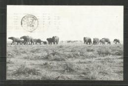 86b * SÜD WEST AFRIKA * ETOSCHA PFANNE * MIT ELEFANTEN * GELAUFEN 1966  **!! - Namibia