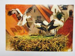 Oiseau , Cigogne , Alsace - Oiseaux