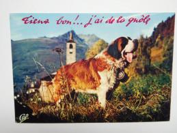 Chien Saint Bernard - Chiens