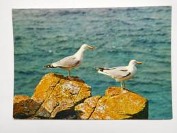 Oiseau , Mouette , Seemöwen - Birds