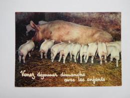 Cochon , Porc , Truie - Cerdos