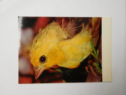 Oiseau , Pinson Doré , Parc De Villars Les Dombes - Oiseaux