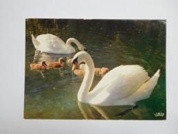 Oiseau , Cygne  , Parc De Villars Les Dombes - Oiseaux