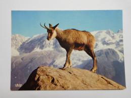 Chamois , Bambi - Animaux & Faune