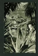 MONACO  -  Exotic Garden View Towards Casino  Used Postcard As Scans - Exotic Garden