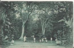 La Reunion  Saint Denis  Le Jardin De L'etat - La Réunion