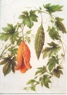 Momordique à Feuille De Vigne : Aquarelle Joséphine Coutance Expo Paris 1833/44 Phitothérpie - Coll Vilmorin - Fleurs