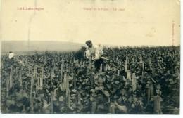 51 - La Champagne - Travail De La Vigne - Le Liage - France