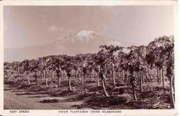 Kilimandjaro TANZANIE  / Plantation De Papayes - Tanzanie