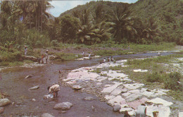 SAINT LUCIA , 50-60s : Washing Day In The Village Of CANARIES - Sainte-Lucie