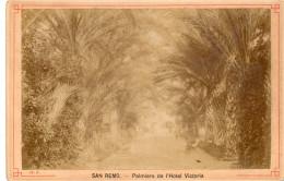 Vecchia Fotografia - San Remo - Palmiers De L'Hotel Victoria - Zonder Classificatie