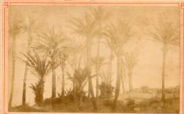 Vecchia Fotografia - Bordighera  - Etiude De Palmiers - Zonder Classificatie